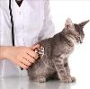 Ветеринарные клиники в Абане